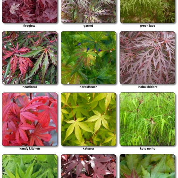 acers_2