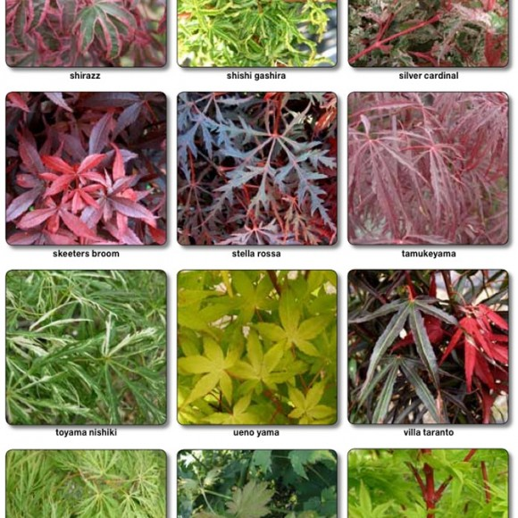 acers_4